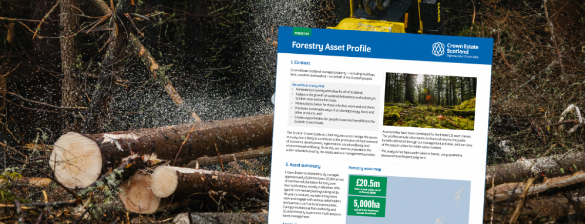 Forestry asset profile