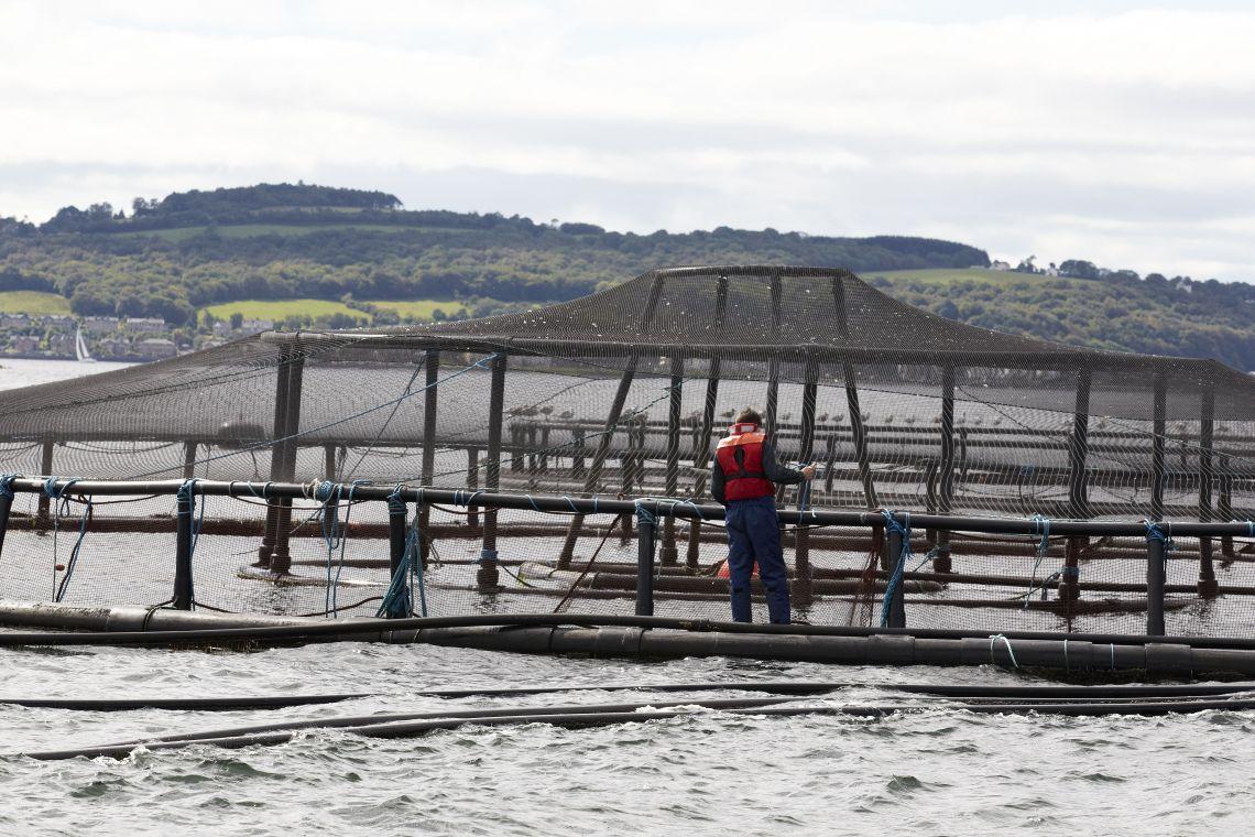 Loch Striven fish farm
